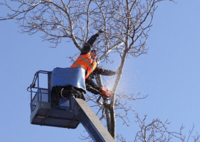 this image shows chino hills emergency tree service