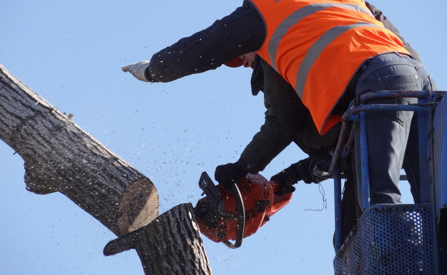 this image shows tree cutting service in chino hills ca