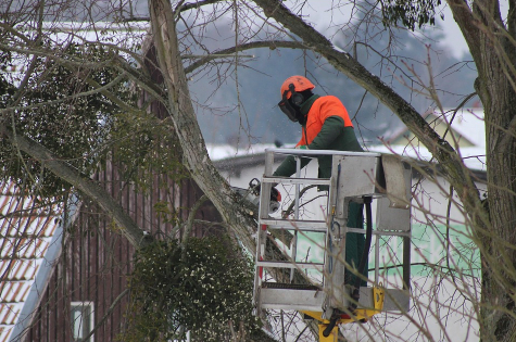 An image of tree pruning in Chino Hills, CA.